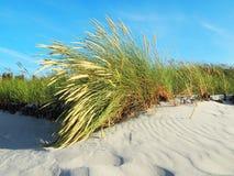 Балтийское море - панорама взгляда пляжа стоковые изображения