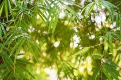 Бамбук выходит предпосылка стоковое изображение rf