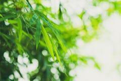 Бамбук выходит предпосылка стоковые изображения rf