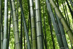 Бамбук в роще Arashiyama бамбуковой, Киото, Японии стоковая фотография
