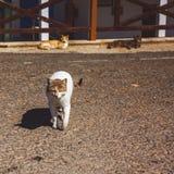 Бездомные прогулки кота улицы на улицах Кипра стоковое фото