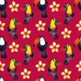Безшовная картина природы акварели hyperrealistic тропиков toucans Азии - черно-белых и покрашенных и plumeria стоковая фотография
