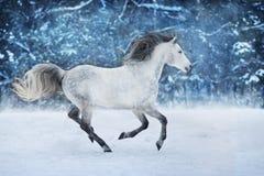 Белая лошадь в снеге стоковая фотография rf