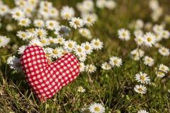 Белая маргаритка и красная диаграмма сердца в природе стоковая фотография rf