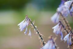 Белый пурпурный цветок протягивает к солнцу стоковое фото