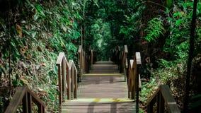Бесконечная деревянная лестница в джунглях Сингапура стоковые фотографии rf
