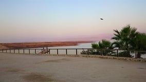 Берег мертвого моря солёный древесина песни природы влюбленности grouse одичалая ландшафт тропический Летнее время стоковые изображения