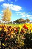 Береза и цветки осени желтая Желтое изображение стоковое фото