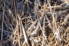 Близкая поднимающая вверх деталь заморозка раннего утра на коричневых сухих травах в горах сьерра-невады Калифорния стоковое изображение
