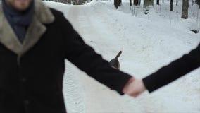 Близкий вверх пар в любов держа руки с собакой на заднем плане Их собака бигля бежать близко видеоматериал