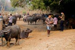 Буйвол в буйволе фермы тайском в буйволе предпосылки фермы в Таиланде стоковая фотография rf