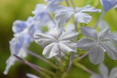 Букет белых цветков стоковые фотографии rf