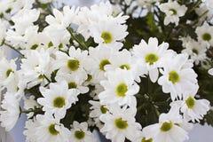 Букет белого похожего на маргаритк взгляда сверху хризантем стоковое изображение
