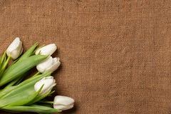 Букет тюльпанов на предпосылке мешковины, границе рамки, плоском положении стоковая фотография rf