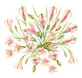Букет цветков, бутонов и шариков сорта растения Alstroemeria на белой предпосылке Розовая перуанская лилия изображение иллюстраци иллюстрация штока
