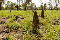 Большие anthills термита Австралия, захолустье, северные территории стоковое фото rf