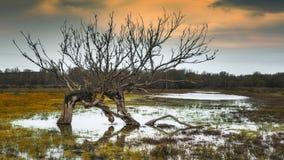 Болото и мертвое дерево стоковые изображения