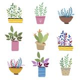 Flowers in pots royalty free illustration