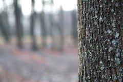 вал текстуры расшивы предпосылки Снимите кожу с расшивы дерева тот трескать трассировок стоковая фотография
