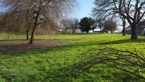 Весна в парке стоковое изображение rf