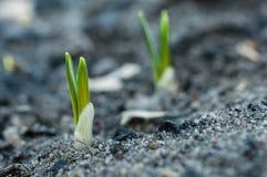 Весна грея для заводов стоковое изображение
