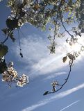 весна california стоковое изображение rf