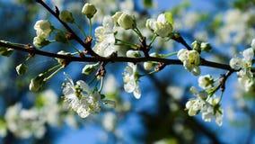Весна Royalty Free Stock Image