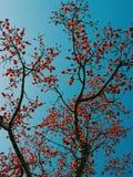 Ветвь дерева в парке стоковое фото rf