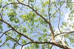 Ветвь дерева и зеленые листья стоковое изображение rf