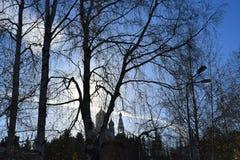 Ветки деревьев без листьев на фоне неба вечером. Branches of trees without leaves against the sky in the evening Stock Photo