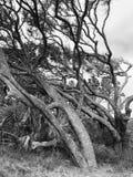 Ветры жизни стоковое фото rf