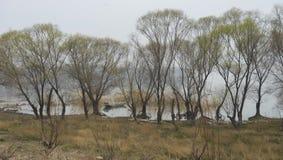 Верба на береге озера Gaoyou стоковые фото