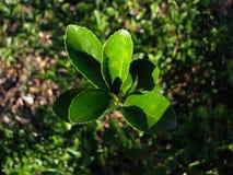 Верхняя съемка зеленого растения стоковые изображения rf