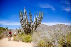 Верховая езда туристов на пляже в Cabo San Lucas, Нижней Калифорнии стоковые фото