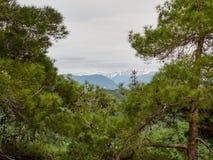 Взгляд высоких гор со снежными пиками через рамку сосен стоковые изображения