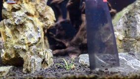 Взгляд конца-вверх на аквариуме очистил с уборщиком Очищая садок для рыбы акции видеоматериалы