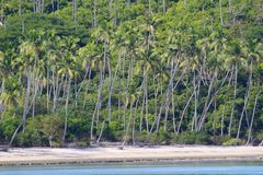 Взгляд пляжа с кокосами тропического острова в Фиджи стоковое фото rf