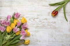 Взгляд сверху ярких красивых тюльпанов на белой деревянной предпосылке, плоском положении Красный тюльпан напротив букета тюльпан стоковые фотографии rf