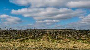 Взгляд яблоневого сада весной стоковое фото