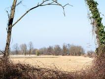 взгляд через рамку дерева сжал fileld в Италии стоковые фотографии rf