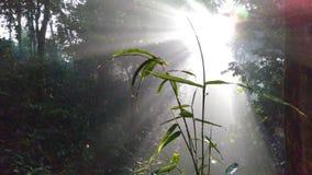 взгляды бамбуковых деревьев против предпосылки солнечного света среди деревьев в тропических лесах стоковая фотография rf