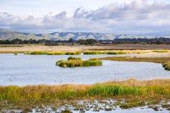 Взгляды болота, холмы региональный парк койота, Fremont, восточный San Francisco Bay, Калифорния стоковые фотографии rf