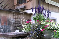 Взгляд состава цветков в тазе олова на предпосылке дома стоковые изображения