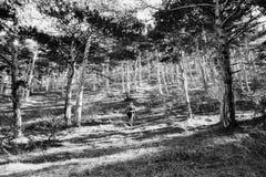 Винтажный ландшафт в древесинах на фильме Атмосферическая просмотренная сетноая-аналогов фотография с зерном стоковые изображения