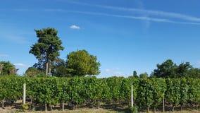 Виноградники в Святом Emilion стоковая фотография