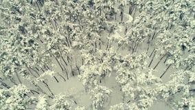 Вид с воздуха вдоль леса зимы сток-видео
