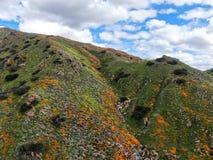 Вид с воздуха горы с маком Калифорния золотым и Goldfields зацветая в каньоне ходока, озере Elsinore, CA США стоковые изображения rf