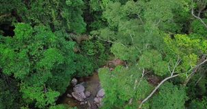 Вид с воздуха леса в Малайзии видеоматериал
