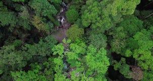 Вид с воздуха леса в Малайзии акции видеоматериалы