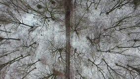 Вид с воздуха леса зимы с путем сток-видео